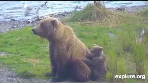 289 with 273 and spring cub July 16, 2015 video by Cloud