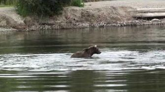 Fishing brown bear in Katmai by edesnaijer (Published 09 24 2009) (409 Beadnose)