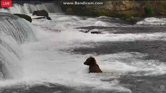 806 Lipfisher tries fishing in the J, video by Ratna Narayan