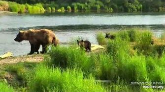 8 Jul 2019 273 Returns with Three Cubs! Video by mckate