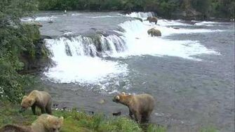 Bear Cam - Brooks Falls Cam 07-18-2017 21 00 08 - 21 59 58 Explore Recorder video