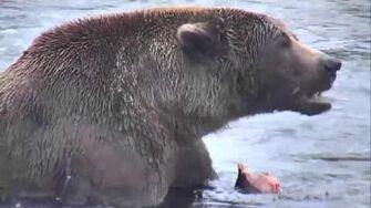 Brooks Falls - Katmai National Park, Alaska Cam 10-15-2015 18 30 26 - 18 35 22 Explore Recorder