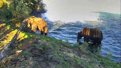09.30.2017 - 480 Otis Slow Exit on the Fish Ladder Path, 151 Walker Watches video by Brenda D