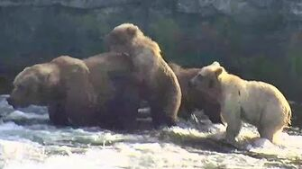 Bear 482 and cubs June to Aug 2019, video by Deanna Dittloff