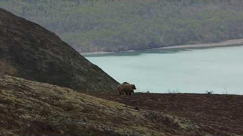 Courting bears on Dumpling Mountain May 17, 2015 video by Mike Fitz