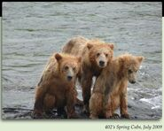 402 PIC 2009.07.xx 3 YEARLINGS NOT SPRING CUBS in 2012 BoBr iBOOK 01