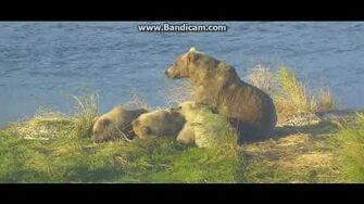 Beautiful sow 482 and 3 cubs ( Smores) P3 28 9 18 by Ratna Narayan