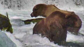 Brooks Falls - Katmai National Park, Alaska Cam 06-28-2016 17 42 00 - 18 42 01 Explore Recorder
