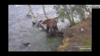 Brown Bear Cam, The Riffles - 10 21 19 by Elle Lynn (aka campfiredavis)