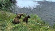 GRAZER 128 PIC 2016.07.08 HER 3 SPRING CUBS JEN POSTED 2019.05.12