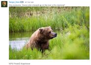 INFO BEARS SEEN 2017.06.21 APPROX 10.54 410 RDAVE COMMENT 2017.06.21 11.09 w PIC 01