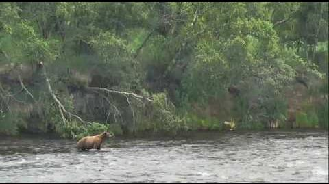 11 3? am 6-23-2016 three bears 89 Backpack follows 289 video by Mickey Williams