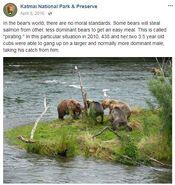 FLO 438 2010.xx.xx w 274 & OTHER 3.5 YO CUB STEALING FISH KNP&P FB 2016.04.08