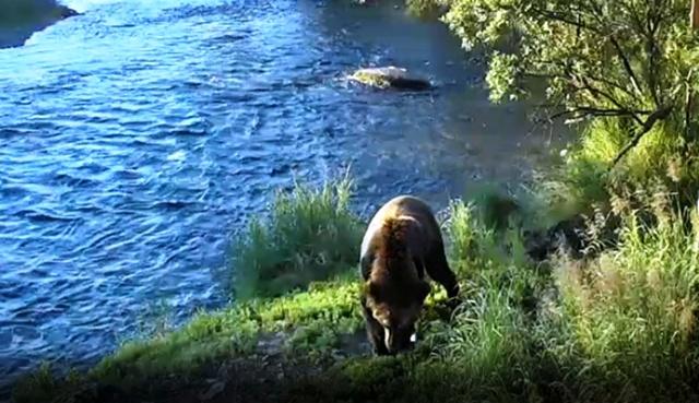 Riverrock walker