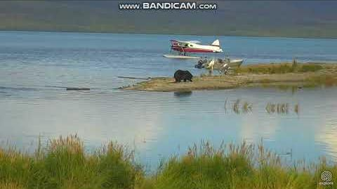 410 digging belly hole and plane leaving 09 09 2017 video by Patricia 65