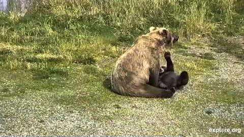 Katmai Park Velcro and Mom 2015.09
