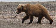 INFO BEARS SEEN 2015.06.07 19.xx BL FB POST OF DIVOT 854 PIC KARA STENBERG PIC