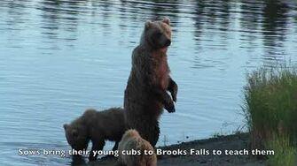 Katmai Brooks Falls, Alaska, video by Kris Hazelton-1