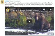 SCRAPPY VIDEO 2019.09.13 MCKATE INFO 2020.01.03 17.25
