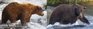 2017 FAT BEAR WEEK ROUND 10 32 CHUNK 2017.07.13 vs 2017.09.11 KNP&P POSTED 2017.10.08