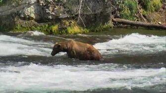 Brooks Falls - Katmai National Park, Alaska Cam 07-08-2016 15 25 12 - 16 00 00 Explore Recorder video
