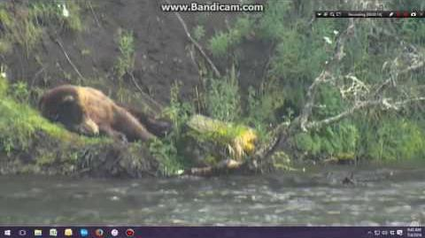 07.04.2016 - 814 Lurch Sleeping video by Brenda D