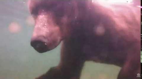 09.02.2016 - 503 Cubadult on Underwater Cam video by Brenda D