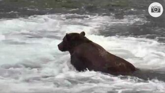 5 15pm 32 chunk joins 747 Katmai National Park and Explore by Mickey Williams