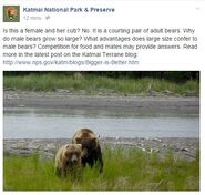 INFO BEARS SEEN 2015.06.09 or BEFORE 856 COURTING DIVOT 854 RMIKE BIGGER IS BETTER BLOG KNP&P FB COMMENT