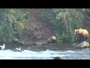 505 PIC 2018.08.06 w 2 SPRING CUBS GOLDILOCKS POSTED 2019.06.05 16.34 06