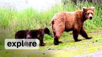 Sow and Cub Spotting 409 Beadnose with her 3 Spring Cubs Early 2012 season by Explore