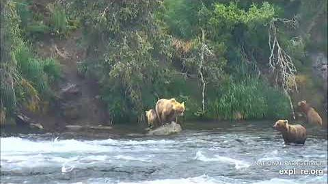 07.05.2018 - 435 Holly and Cubs at the Falls by Brenda D
