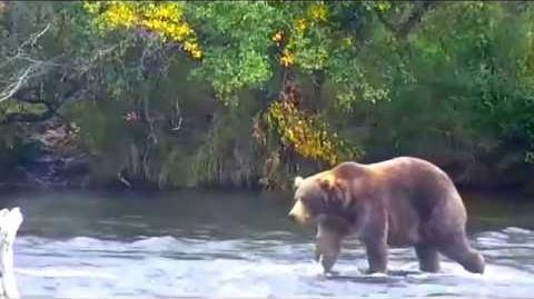89 BackPack at Katmai NP ~ 2015 09 09 video by Victoria White