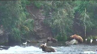 2 Aug 2018 505's Cubs Make Their Debut! Video by mckate