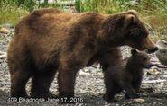 BEADNOSE 409 PIC 2016.06.17 NPS PHOTO 2016 FAT BEAR WEEK ROUND 2.2 409 vs 410