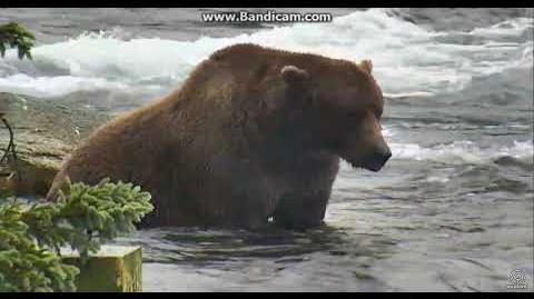 Gorgeous bear 856??????????? 9 23 2017 by Ratna
