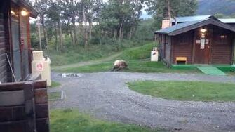 Mom and kids visiting Brooks Lodge, Katmai National Park, AK, video by Mary Hallowell