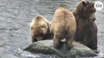 Gorgeous video 708 and cubs P1 Oct 16, 2016 by Ratna