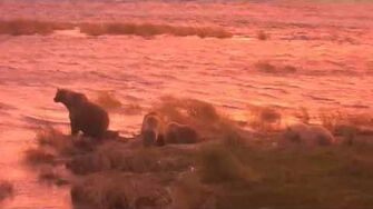 482 Brett and coy early morning sunrise visit 9 29 2018, video by Lani H