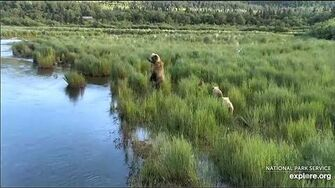 25 Jun 2020 273 and Her Yearlings Arrive, video by mckate