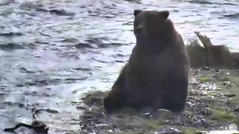 Bear on island 10.15