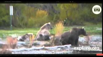 Lr Beadnose and cubs wait busstop 9-30-2013 9-55-48 PM by kidnaround1