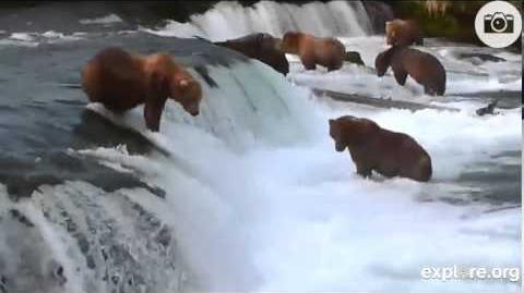 Brooks Falls Brown Bear & Salmon Cam 7-10-2013 video by dragonlainey