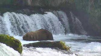806 Bear Cam - Brooks Falls Cam 07-14-2017 12 00 07 - 12 59 58