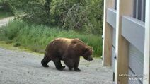 BEARCAM WEEK IN REVIEW PHILLYDUDE 2020.06.29 03.07 PIC ONLY 10 747 BETWEEN 2020.06.22 - 2020.06.28