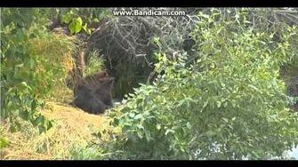 Bandicam 2015 07 24 18 31 21 097, video by Nancy Clark