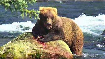 Brooks Falls Brown Bears Cam 07-26-2018 14 01 24 - 15 01 25 Explore Recorder