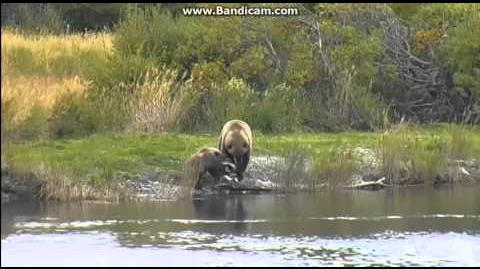 """Mum HELP it`s moving"" cub""Velcro"", 273 the fish ) 9-22-2015 video by Martina"