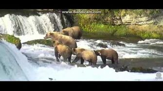 39 and 3 yearlings at falls August 5, 2017 by Ratna