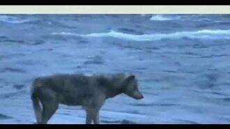 Lip Fisher Wolf BF 7 4 2020 by Cruiser